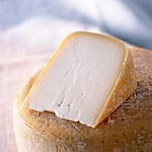 Ein Stück Ossau-Iraty (Schafskäse aus den Pyrenäen)