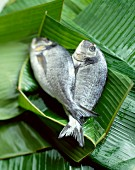 Sea bream in palm leaves