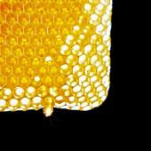 Gefüllte Honigwabe vor schwarzem Hintergrund