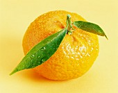 mandarine with leaves