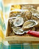 Steige Austern, teilweise geöffnet mit Austernmesser