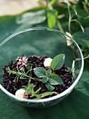 Tea with fresh herbs