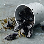 Mussels and bucket