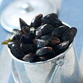 Mussels in bucket