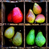 Selection of pears