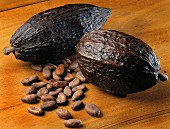 Cocoa cabosse pod and cocoa beans