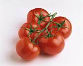 Frische Tomaten an den Rispen