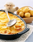 Gratin dauphinois sliced potato dish