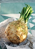 Root celery