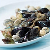 Selection of shellfish