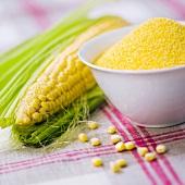 Maiskolben, Maiskörner und Maisgriess