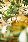 olive oil and a branch of olives