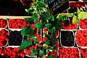 Fresh raspberries and blackberries in cardboard punnets on a market stall