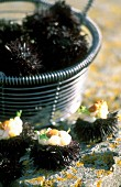 Sea urchins with scallops next to a metal basket