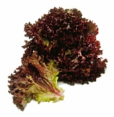 Red Lollo Rosso lettuce