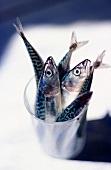 Lisette mackerel in glass