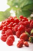 Erdbeeren, Himbeeren und rote Johannisbeeren