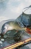 Ein Hecht im Fischernetz auf dem Steg