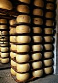Parmesan cheeses in a cellar