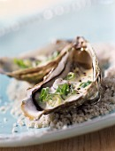 Warm oysters with chive sauce