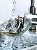 Rinsing anchovies in the sink