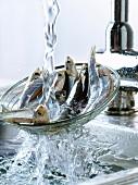 Anchovis mit einem Sieb in einem mit Wasser gefüllten Spülbecken waschen