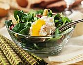 Gemischter Salat mit pochiertem Ei