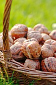Basket of walnuts in the grass