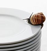 Lebendige Schnecke auf einem Stapel Teller
