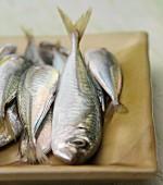 Horse mackerels
