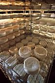 Maturing Camemberts