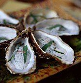 Oysters with a tarragon emulsion