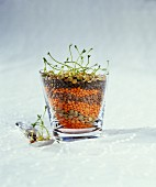 Various types of lentils in a glass