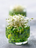 Broad bean,pea,herb and agar-agar Verrines
