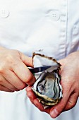 Person opening an oyster
