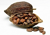 Open cocoa bean