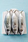 Three raw mackerels