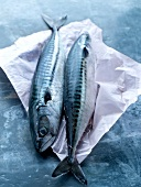 Two raw mackerels