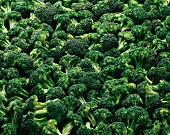 Overall of broccolis