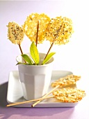 Crunchy cheese tuile biscuit lollipops