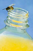 Bee on the top of a bottle of orange juice