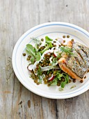 Grilled piece of salmon with green lentil and radish salad