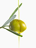 Olive and oil on an olive branch on a white background
