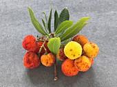 Arbutus-berries