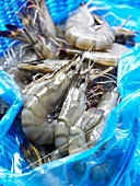 Raw shrimps from Madagascar