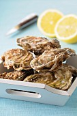 Closed oysters