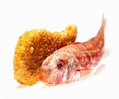 Whole raw red mullet and breaded fish on a white background