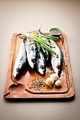 Whole raw mackerels