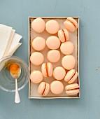Apricot-rosemary macaroons