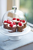 Chocolate-raspberry cupcakes under a glass dome